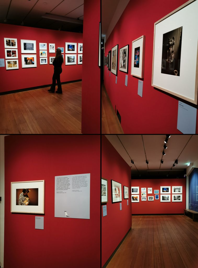 Views of exhition of Neko Project photographer in Leiden