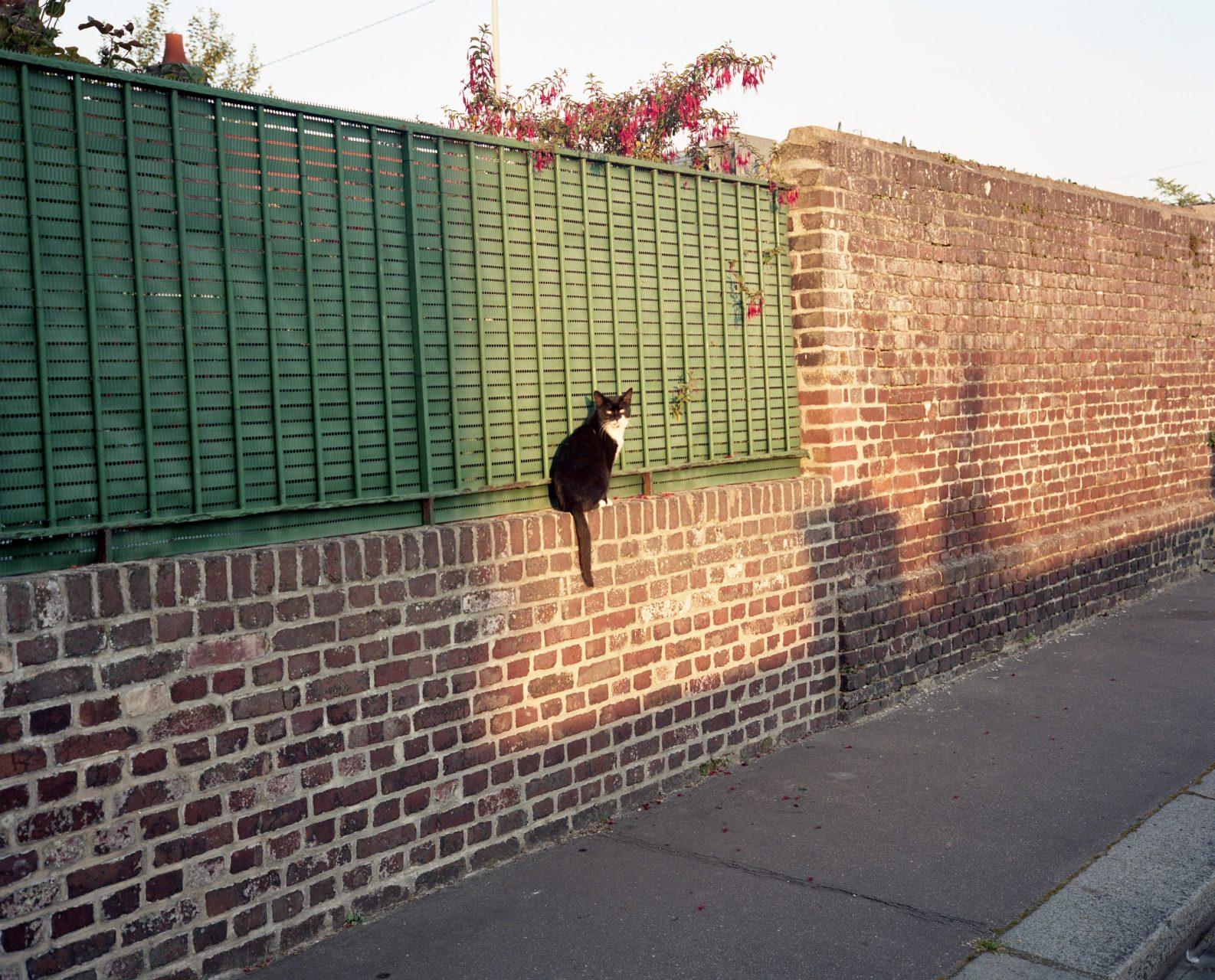 cat on a wall by Takahiro yamashita